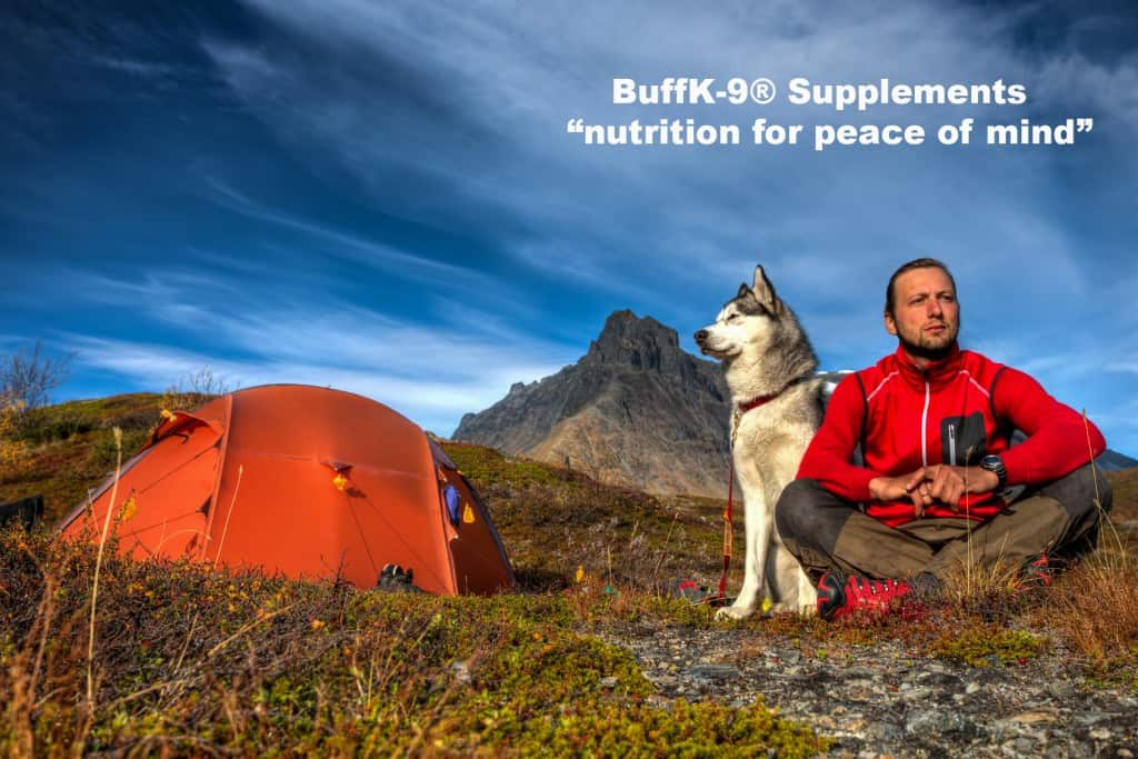 dog supplements and nutrition information